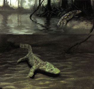 The Devonian terrestrial choanates Acanthostega and Ichthyostega