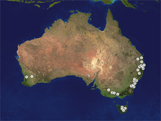 Distribution map of Megalyra rufipes